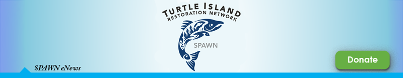 Turtle Island Restoration Network Header